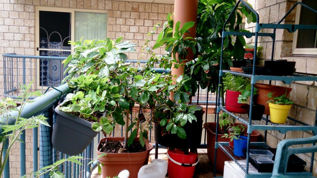 best of balcony vegetable garden ideas for apartments layout-Inspirational Balcony Vegetable Garden Ideas for Apartments Photo