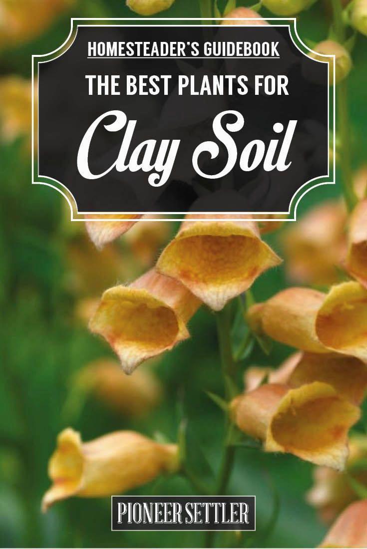 inspirational garden ideas clay soil photo-Stunning Garden Ideas Clay soil Wallpaper