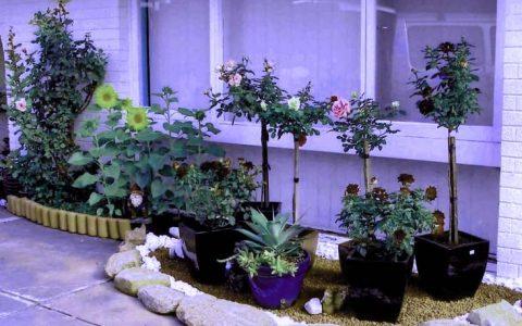 picture of modern-gardenedging-ideas