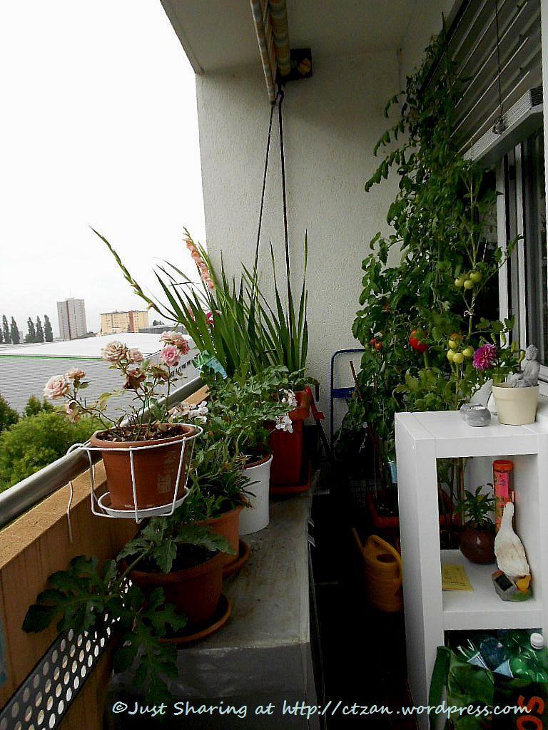 sensational balcony vegetable garden ideas for apartments plan-Inspirational Balcony Vegetable Garden Ideas for Apartments Photo